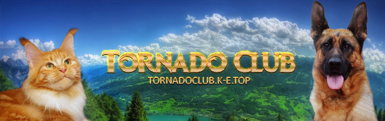 Питомник мейн-кунов и немецких овчарок Tornado Club*RU Тверь Россия